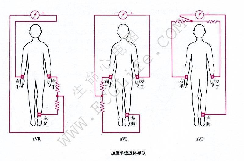 心电图导联位置详解(12导联体系)