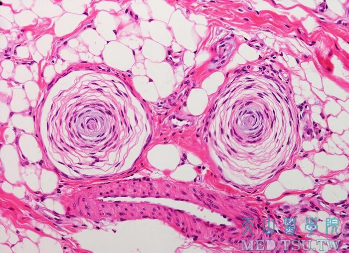 皮肤的神经,血管,淋巴管,肌肉
